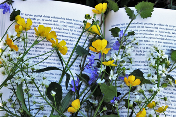 Literacy Corner: Summer Reads List